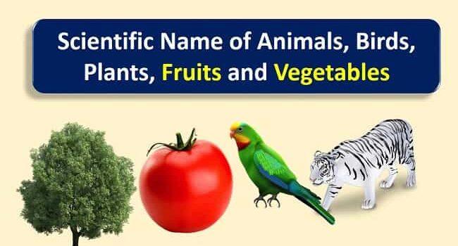Scientific-name-animal-birds-plants-